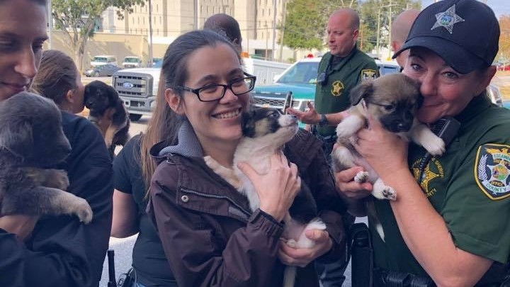 Great Christmas Puppy Rescue': Florida police rescue puppies