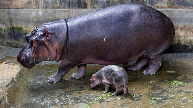 Two people, including Chinese tourist, killed in Kenya hippo