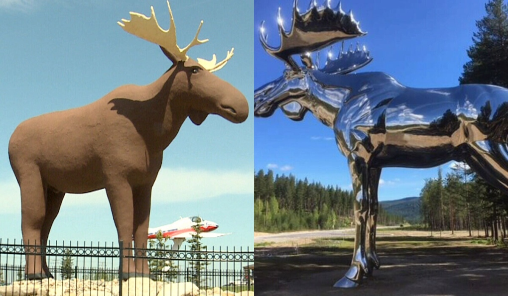 Image result for world's largest moose