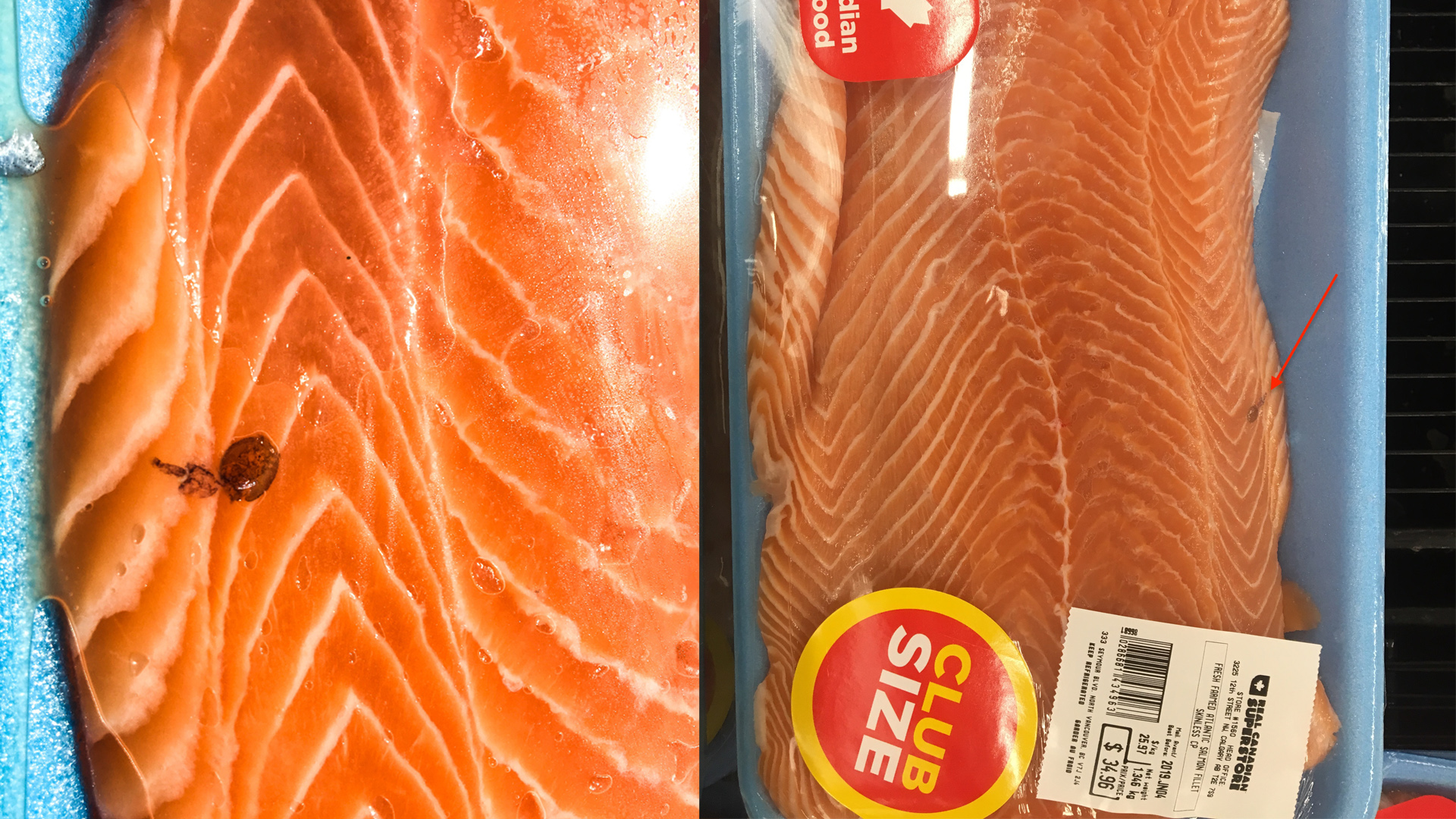 Sea louse found in packaged salmon from North Vancouver store   CTV News