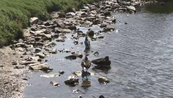 Dead fish washing ashore at popular Timmins lake | CTV News Northern