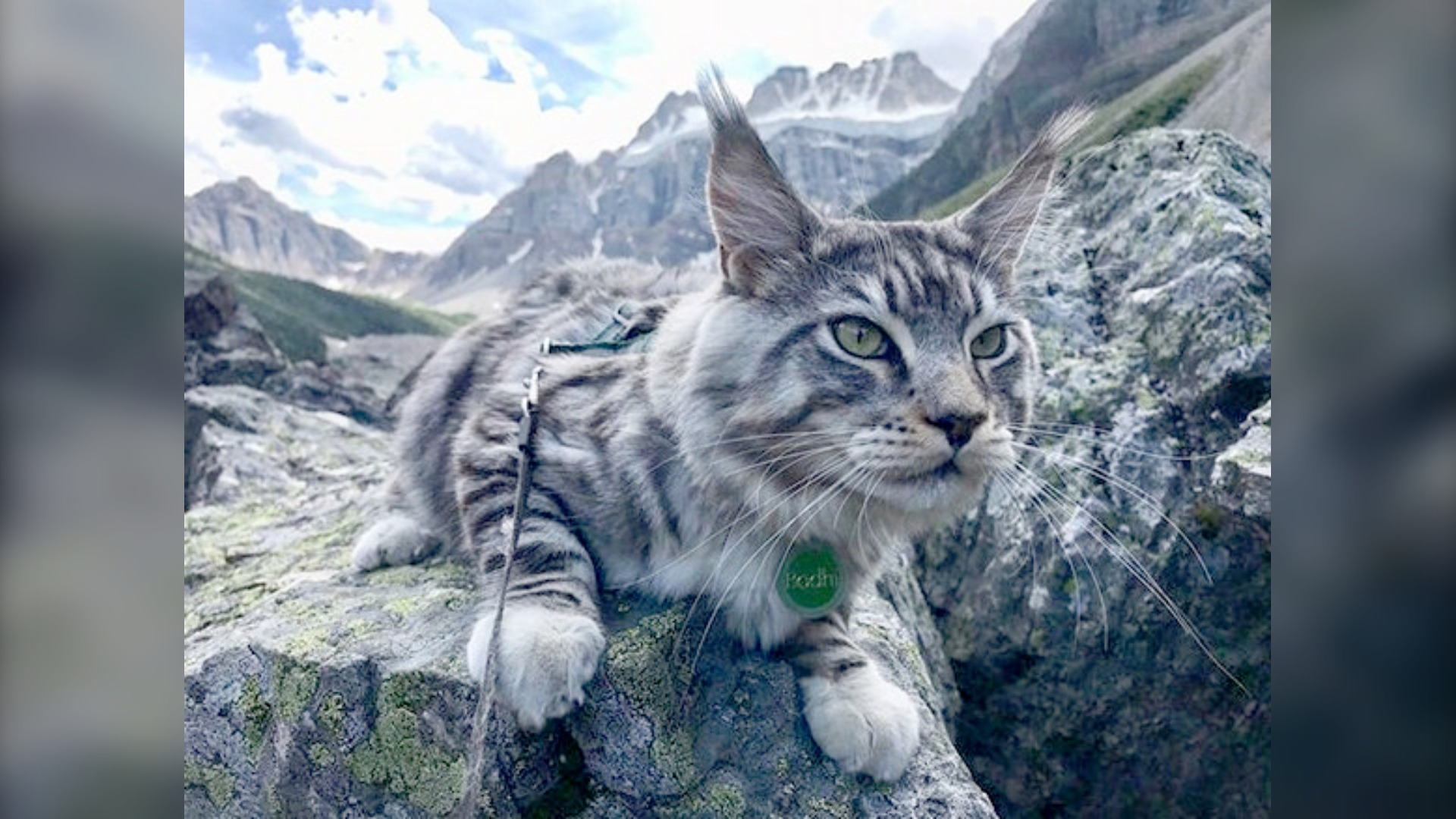 Bodhi the Adventure Cat proves mountains aren't just for