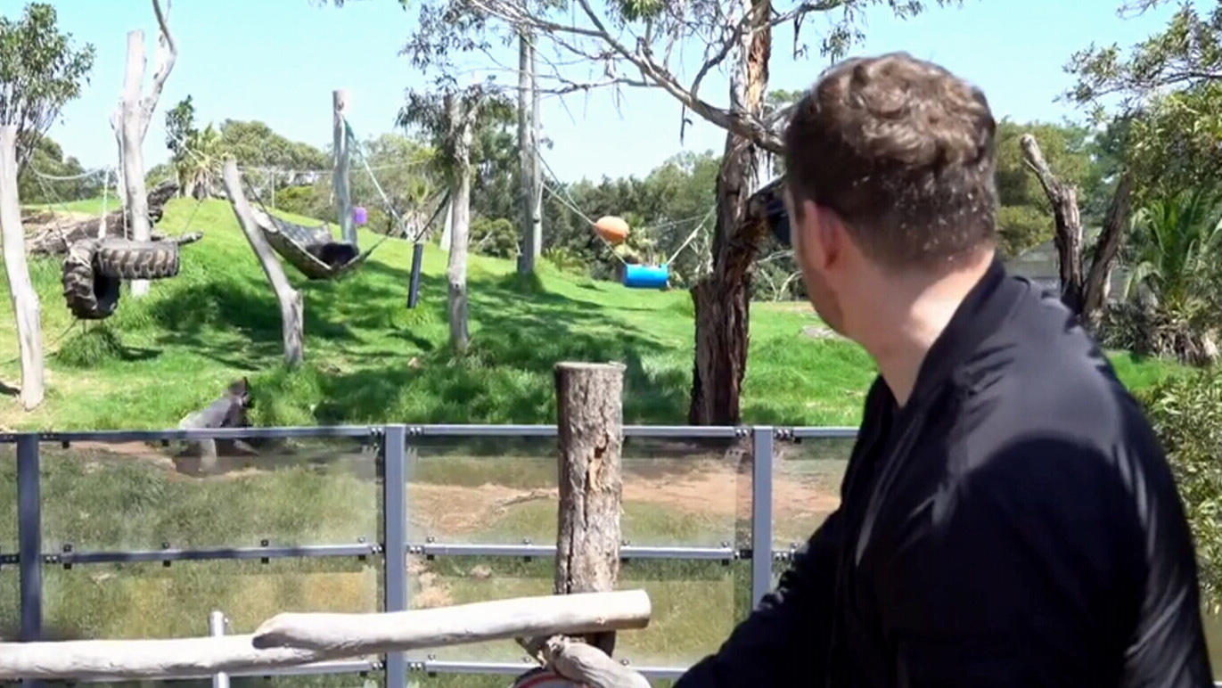 Michael Buble Christmas 2020 Ctv Gorillas in Australia soothed by Michael Buble's 'beautiful low