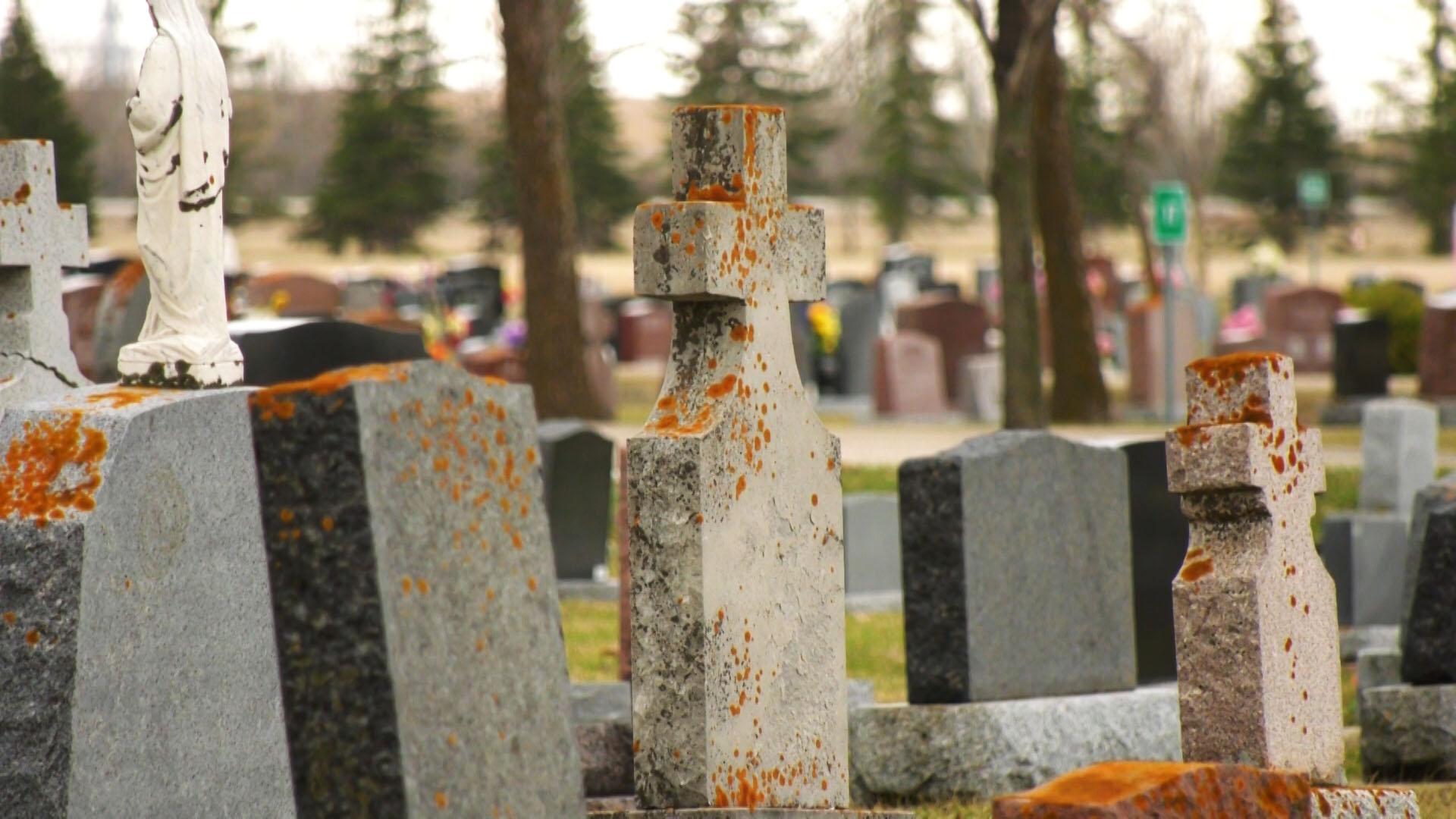 29 Top Pictures Cat Cremation Cost Winnipeg / Precious Pet ...
