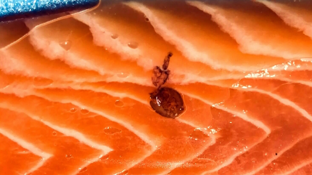 Sea louse found in packaged salmon from North Vancouver